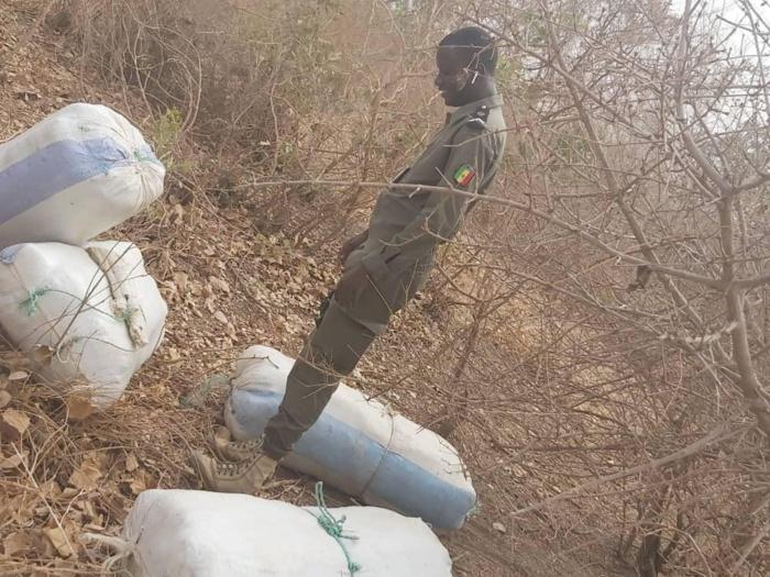 LUTTE CONTRE LE TRAFIC DE STUPEFIANTS : La Douane de Nioro saisit 200 kg de « Green »  à Paoskoto.