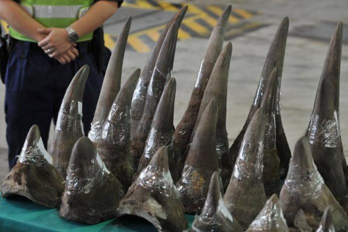 Trafic de cornes de rhinocéros, d'ivoire d'éléphants et blanchiment d'argent : Le Sénégal a extradé un citoyen guinéen vers les États-Unis.