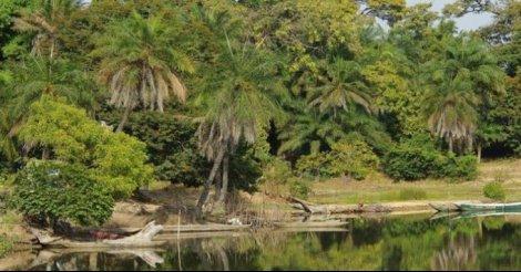 KOLDA : lutte contre la coupe de bois et la reforestation au menu de la célébration de la journée nationale de l'arbre.