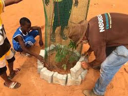 Reforestation à Kolda : Écoles, routes principales reboisées.