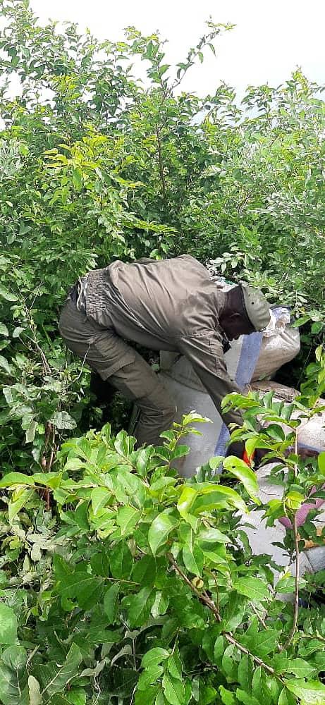 LUTTE CONTRE LE TRAFIC ILLICITE : Des saisies de cigarettes, de faux médicaments et du chanvre indien opérées à Rosso, à Kaffrine et à Nioro par les Douanes.