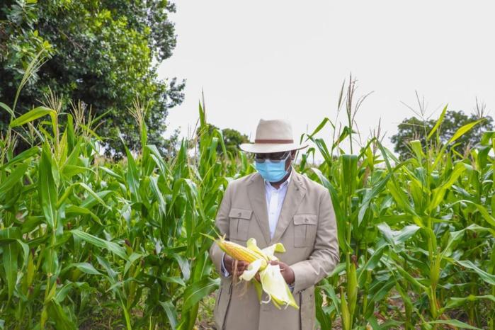 Keur Socé / Macky Sall : «J'ose espérer que d'ici 1 mois nous aurons des récoltes très abondantes... Avec le riz de plateau nous allons atteindre plus rapidement nos objectifs d'autosuffisance en riz»