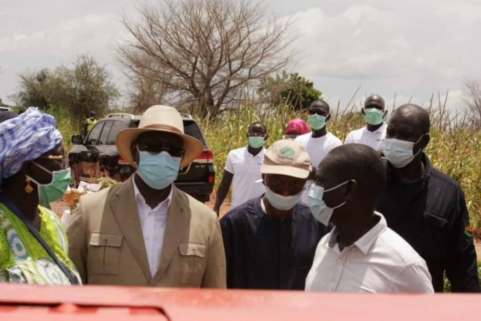Tournée agricole du président de la République dans le Saloum : Serigne Mboup mobilise les acteurs économiques.