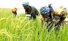Financement de l'agriculture : l'implication des banques jugée « trop faible »