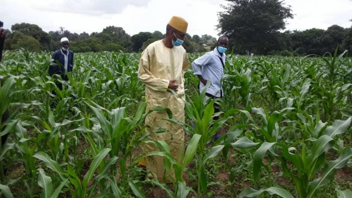 Visite agricole à Coumbacara : Le ministre de l'agriculture satisfait de l'état des cultures…