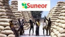 """""""Fuite"""" des arachides : des huiliers sénégalais redoutent un arrêt des usines"""