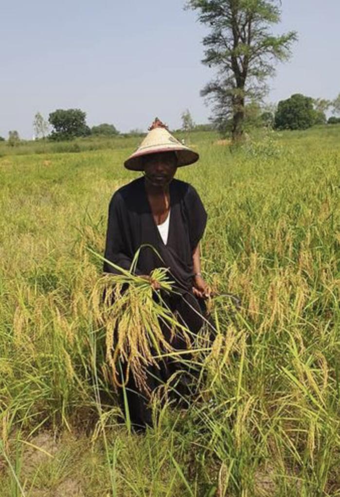 Autosuffisance alimentaire en riz : Du concept à la réalité au Fouladou...