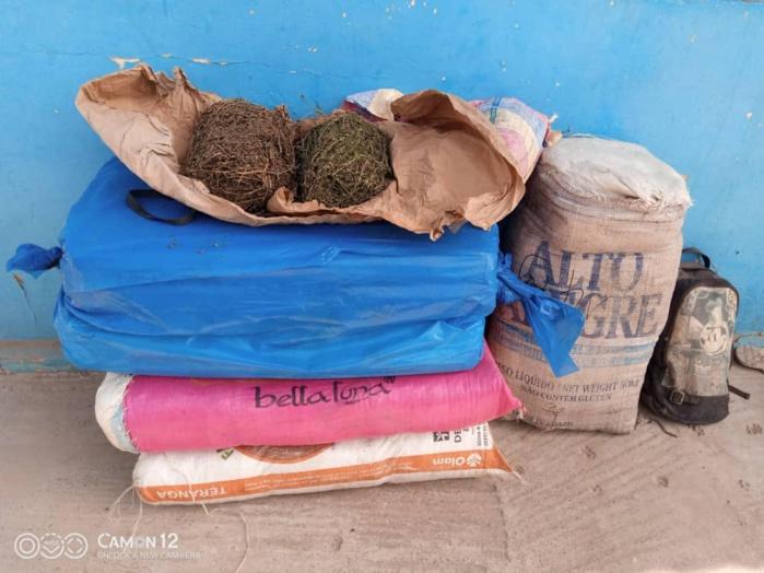 SÉDHIOU : 64 kg de chanvre indien saisis par la brigade de gendarmerie.