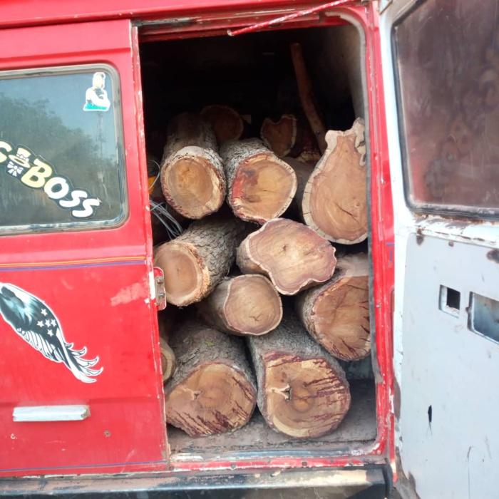 Opération de police forestière : 350 troncs saisis et 3 personnes arretées dans la zone de Dianké Makkah