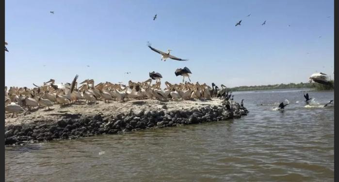 Mauritanie : Le Parc national du Diawling fermé pour cause de grippe aviaire.
