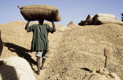Campagne agricole : des chinois trafiquants d'arachide arrêtés