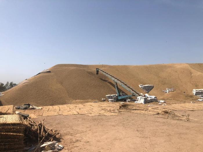 Campagne de commercialisation arachidière à Kolda : 11.865 tonnes collectées par la Sonacos...