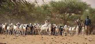 Résilience des systèmes pastoraux : 5 pays du Sahel dont le Sénégal bénéficient d'un financement de 375 millions de dollars de la Banque Mondiale