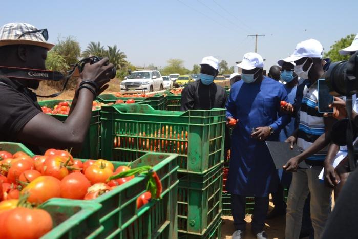 Insertion des jeunes : L'ANPEJ et la FAO lancent un programme de 23 fermes agricoles