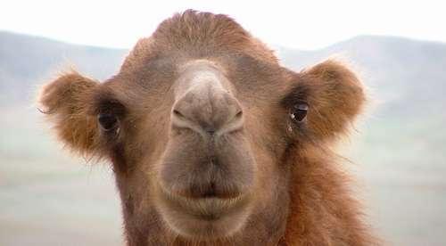 Combat du 02 juin : Balla Gaye 2 expédie une tête de chameau à Tapha Tine