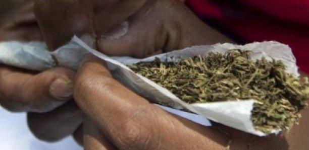 Cession de chanvre indien : « Je suis consommateur (...) le chanvre m'a guéri (...) je n'arrêterai jamais de fumer » (propos de prévenus)