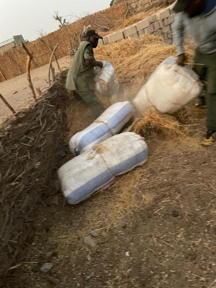 Trafic de stupéfiants : La Douane saisit plus d'une tonne et demi de chanvre indien à Fimela, à Nianing, à Fatick et à Kaolack.