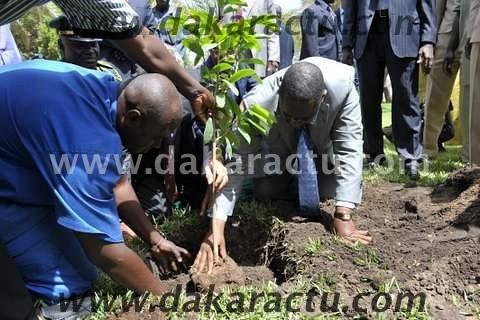 JOURNEE NATIONALE DE L'ARBRE : Macky Sall pour une reconstitution de la couverture végétale