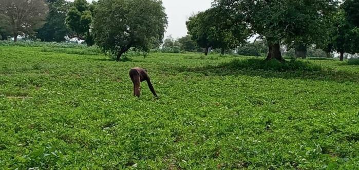 Déficit d'engrais dans le monde rural : Les distributeurs privés tirent la sonnette d'alarme et estiment le gap à plus de 100.000 tonnes.