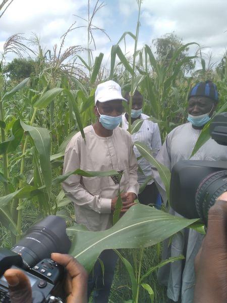 Tournée de suivi de la campagne agricole : à Tamba, Moussa Baldé (MAER) se félicite du bon comportement des cultures …