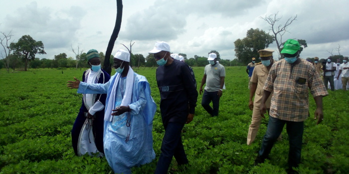 Tournée de suivi agricole : Moussa Baldé (MAER) satisfait de l'état des cultures à Kolda…