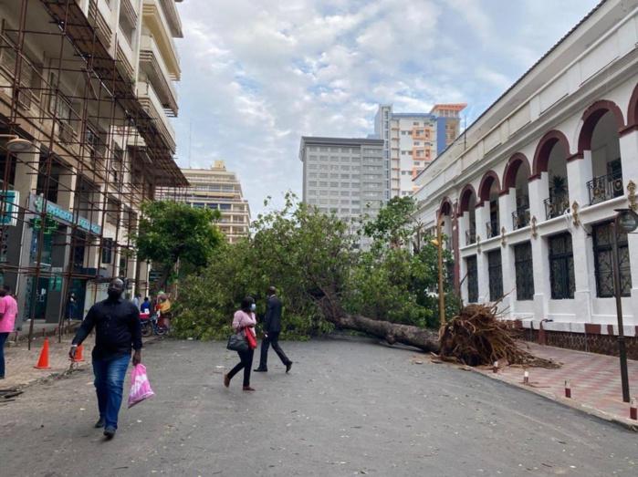 Albert Sarrault : des arbres déracinés par le vent font d'énormes dégâts
