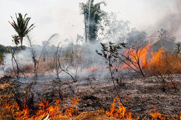 Madagascar : un incendie ravage plus de 100 hectares du parc national d'Ankarafantsika.