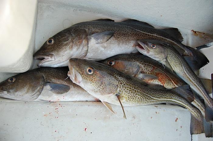 Gestion des ressources : « Les rapports statistiques publiés par le ministère de la pêche ne sont pas fiables » (Dr Alassane Samba)