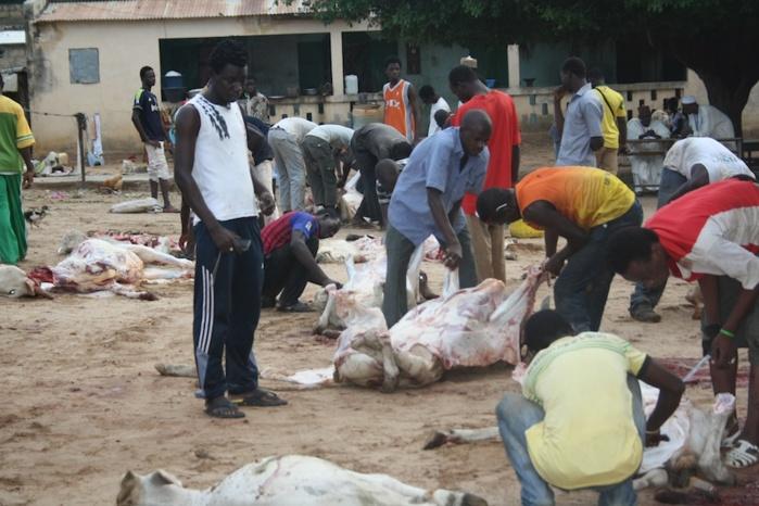 Ces bons points du Partenariat Gift of the Givers, Cheikh Mahi Cissé et ESAD : 150 bœufs distribués aux Dahras et à des indigents à Médina Baye