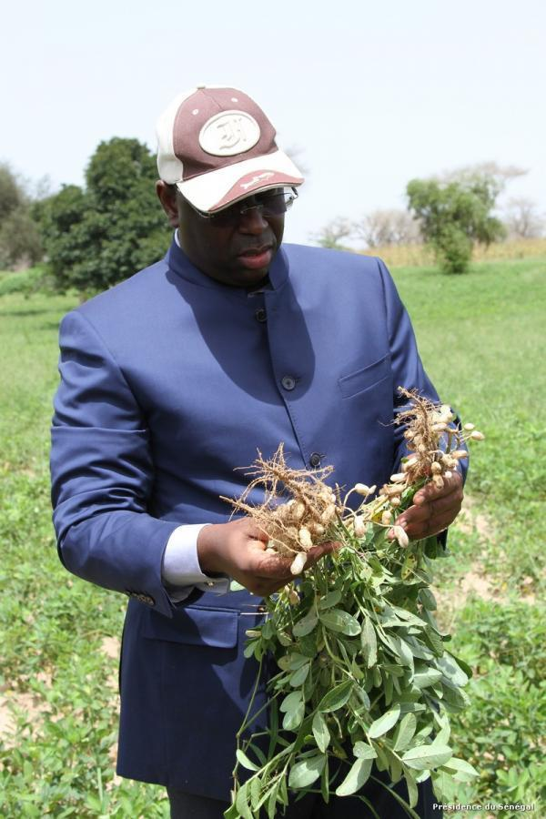 Affectation supplémentaire de terres de la Compagnie sucrière sénégalaise Le forum civil demande au gouvernement de publier la convention qui la lie avec la CSS