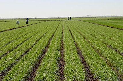 Défaillances notées dans le domaine agroalimentaire : Le RIADE affiche ses propositions innovantes