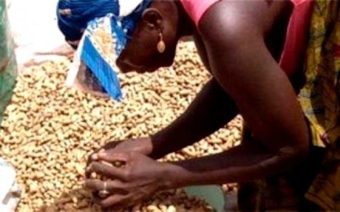 Campagne de commercialisation de l'arachide La SUNEOR invitée à payer la dette due à certains opérateurs