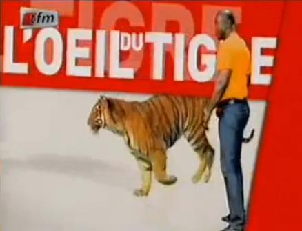 L'oeil du Tigre - 24 Janvier 2014