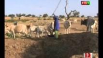 Lutte contre le vol de bétail à Ferlo