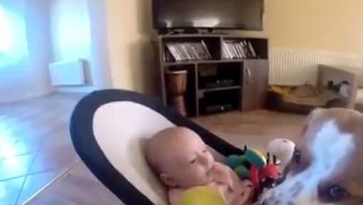 Les excuses émouvantes d'un chien à un bébé