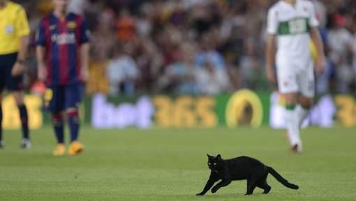 Un chat noir s'invite au Camp Nou