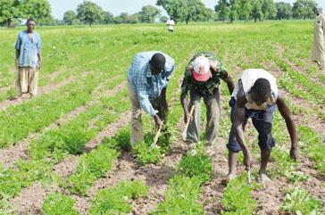 Retour des pluies, distribution de semences à cycle court… : L'espoir renaît dans le monde rural