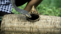 Chine : un cuisinier meurt mordu par un cobra qu'il tentait de cuire