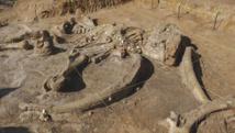 Un mammouth incroyablement bien conservé découvert dans le sol d'une ferme au Texas