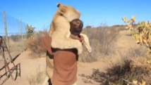 Une lionne saute sur un homme pour... l'enlacer !