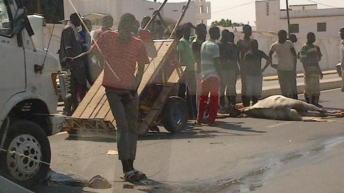 TOUBA : face aux récurrents accidents de charrette en cette veille de Magal
