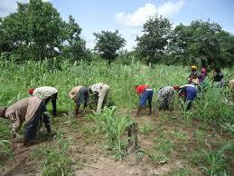 PRODAC : 13.000 hectares de terres seront affectés à des lutteurs