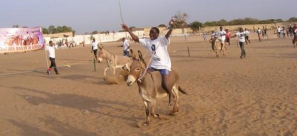 Louga-Sport : en vue du championnat national de courses d'ânes, la capitale du N'diambour a organisé ce samedi sa première course