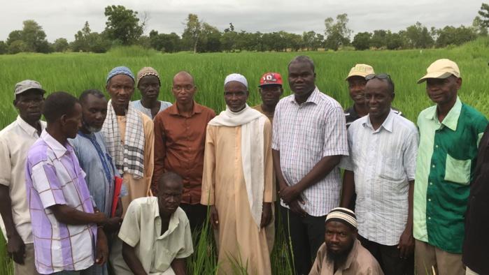 Autosuffisance en riz dans le Sud : Les objectifs en passe d'être réalisés