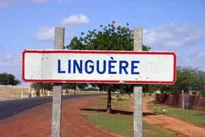 Tenue d'un forum sur le développement socio-économique du département de Linguère