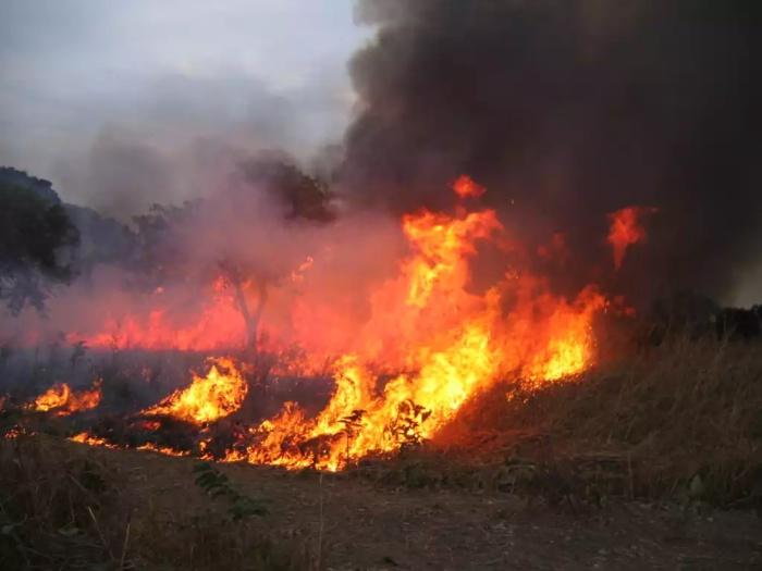 Le département de Linguère enregistre son premier cas de feu de brousse