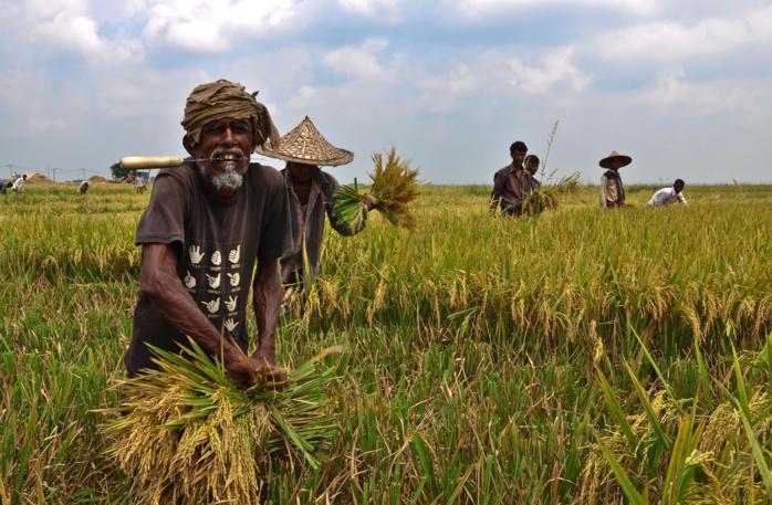 Démarrage de la campagne de commercialisation de l'arachide, le 16 novembre prochain