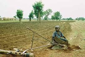 Droit de l'environnement : Le Sénégal invité à mettre en place des chambres environnementales au sein des juridictions