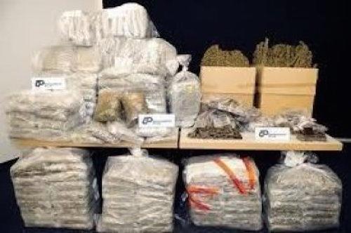 Drogue : 97 kg de chanvre indien saisis hier à Diass