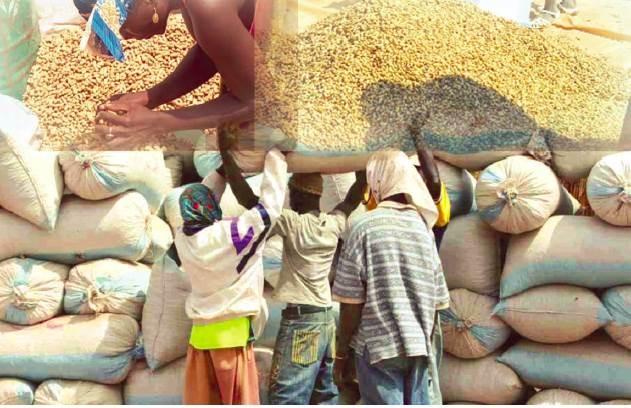 « Les chiffres de l'Etat sont inexacts...La production nationale arachidière est entre 500 et 600 000 tonnes ! »  (SYNDICALISTES)